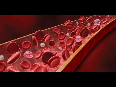 Anatomy and Physiology of Blood