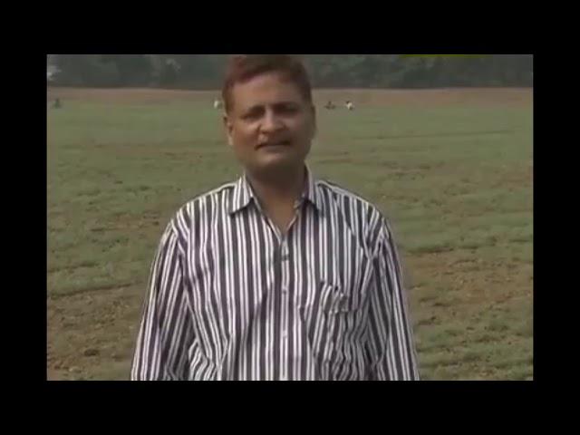 कैसे करें चने की खेती, आईए जानें कृषि विशेषज्ञ से...