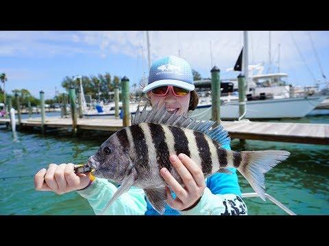 Sheepshead Challenge (Saltwater Fishing Florida Sheephead)