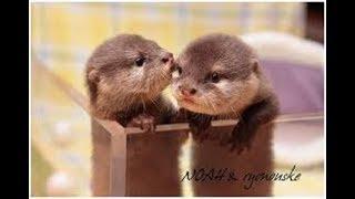 【カワウソ】生まれて間もないカワウソの赤ちゃんがかわいすぎる【赤ちゃん】~baby otter~