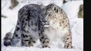 O felino selvagem de cada signo🐆🐅🐈