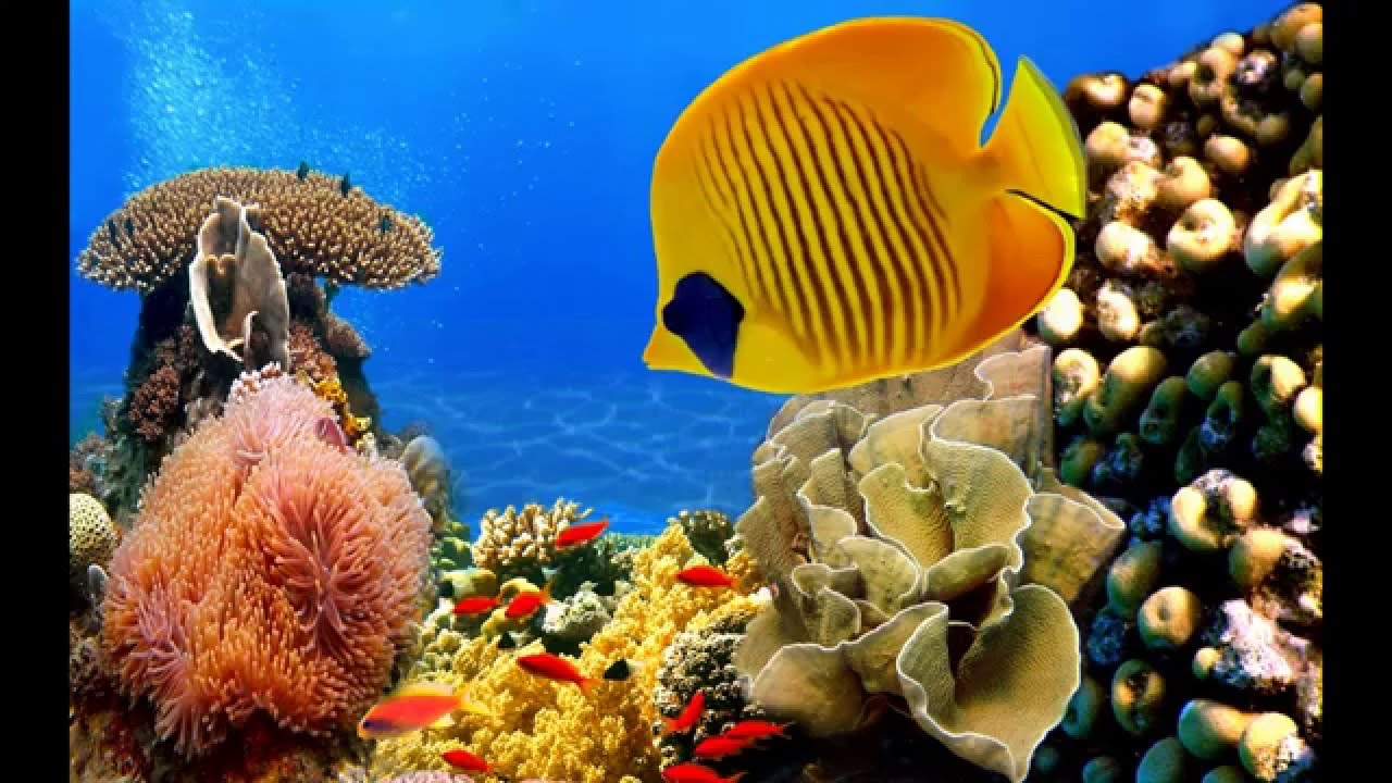 Amazing hd tropical fish pictures youtube for Jans tropical fish