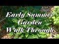 Early Summer Garden Walk Through ~ Noreen's Garden