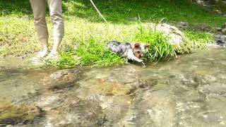 初めての川遊び。結構水遊び好きみたいです。