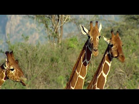 Shaba un lugar de Kenia