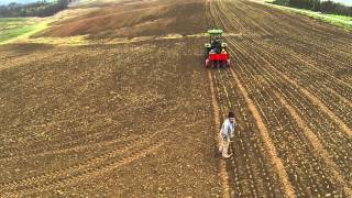 Farmers Planting Cabbage