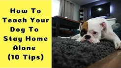 How To Teach Your Dog To Stay Home Alone (10 Tips To Leave Puppy Home Alone)