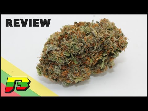 Bubba Kush Weed Review | BammerTV