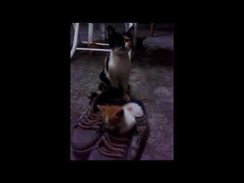 yavru kedicik ayakkabının içinde uyuyakalırsa:) (sleeping pussycat in sneakers:)