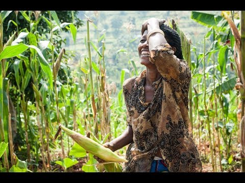 Ending Poverty in Africa, One Acre at a Time | One Acre Fund | Andrew Youn