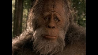 Tarot Mysteries: Is Bigfoot Real?