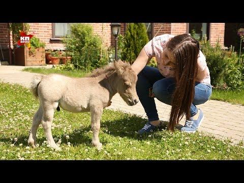 Под Петербургом в поселке Скотное родился самый маленький конь