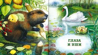ГЛАЗА И УШИ.Виталий Бианки аудио сказка: Аудиосказки-Сказки на ночь.Слушать сказки онлайн