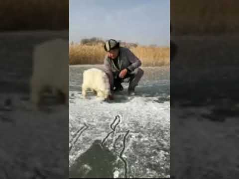 Great Fishing Technique ||