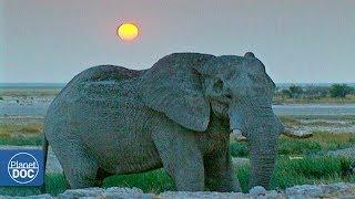 Documentary: African Elephants - Part 1