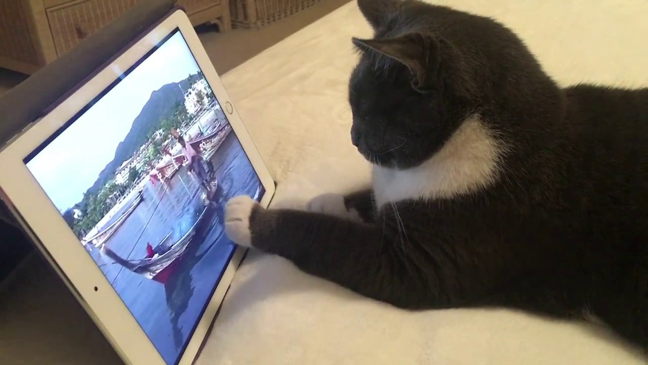 Cat Picks YouTube Video on iPad