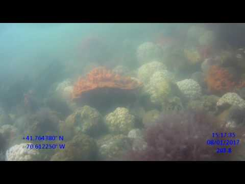 Jaroslow Reef Mapping 2017