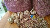 Семена сои под раундап - YouTube