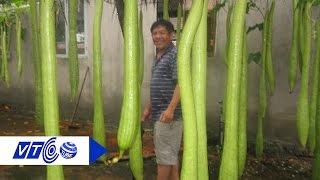 Thu nhập khủng nhờ trồng mướp Thái Lan | VTC