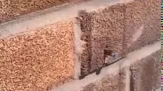 Bee removes nail to get into wall :)
