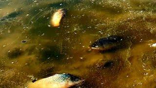 Рыбалка по первому льду 2019 2020 НАШЛИ МНОГО РЫБЫ В ЗАМЕРЗШЕЙ ЛУЖЕ