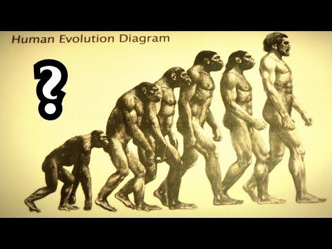 Die Geheimnisvolle WAHRHEIT Hinter Der Evolutionstheorie