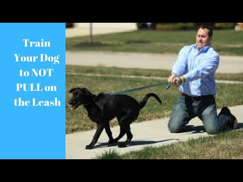 how-to-train-your-dog-to-not-pull-on-the-leash!