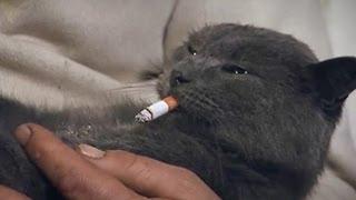 Василь Кіт навчив котів курити