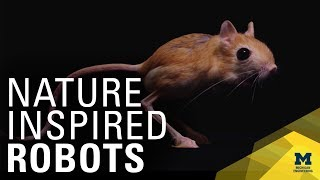 Studying the Jerboa to Advance Bipedal Robots