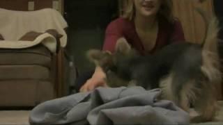Cutest Puppy Evar vs. Underwear