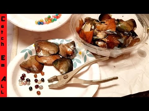 CAUGHT $10,000 RIVER CLAMS in BACKYARD!