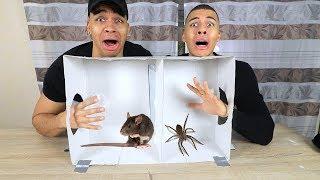 WAS IST IN DER BOX CHALLENGE EXTREM !!! | PrankBrosTV