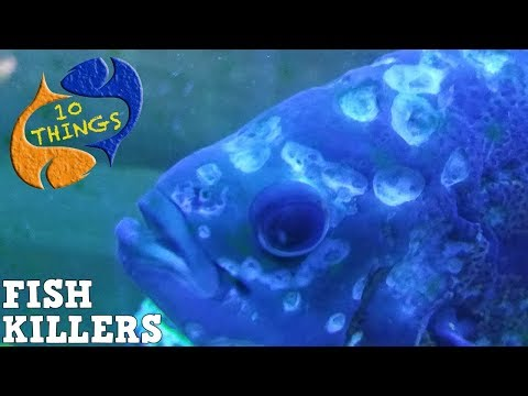 Top 10 Fish Killers, 10 Most Common Fish Keeping Diseases, 10 Things
