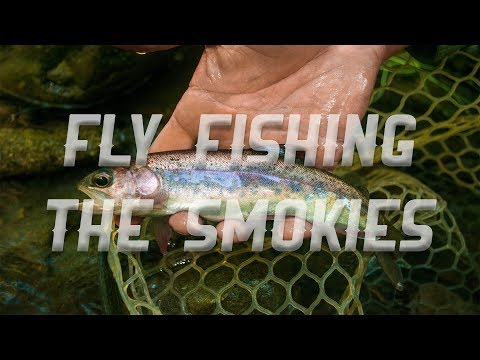 Fly Fishing the Smoky Mountains with Tennessee Valley Anglers