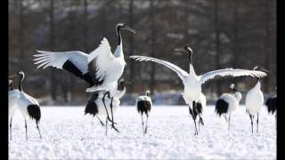 Three Notes Of Japan: I. Dance Of The Cranes - Toshio Mashima