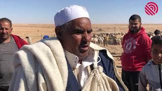 موسم جز صوف الاغنام في ليبيا