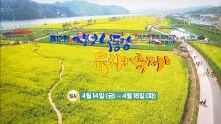 [홍보 SPOT] 창녕 낙동강 유채 축제 (2017.04월)