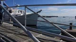 MPBN Out and About- Dockside Veterinary Services