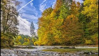 Nature Relaxing Sounds | 2 Hours Stress Relief, Healing, Deep Sleep Pure Nature Ambient Sounds