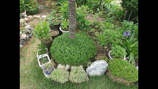 아파트에서 이사와 꾸미는 주부의 아름다운 정원