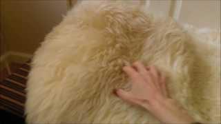 Lambskin Fur Baby