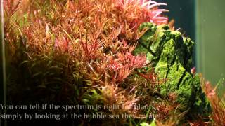 ista professional plants led light aquascaping