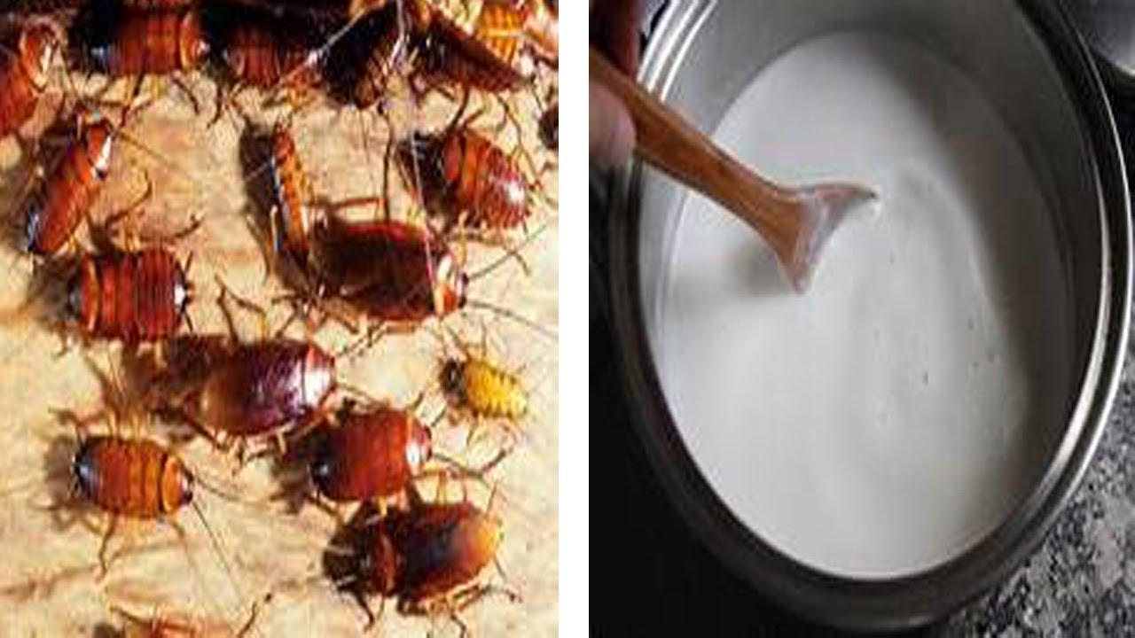 receta de bicarbonato y azucar para las cucarachas