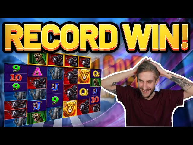 RECORD WIN! Safari Gold BIG WIN - Online Slots from Casinodaddys live stream