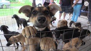 Кому нужны бездомные животные?