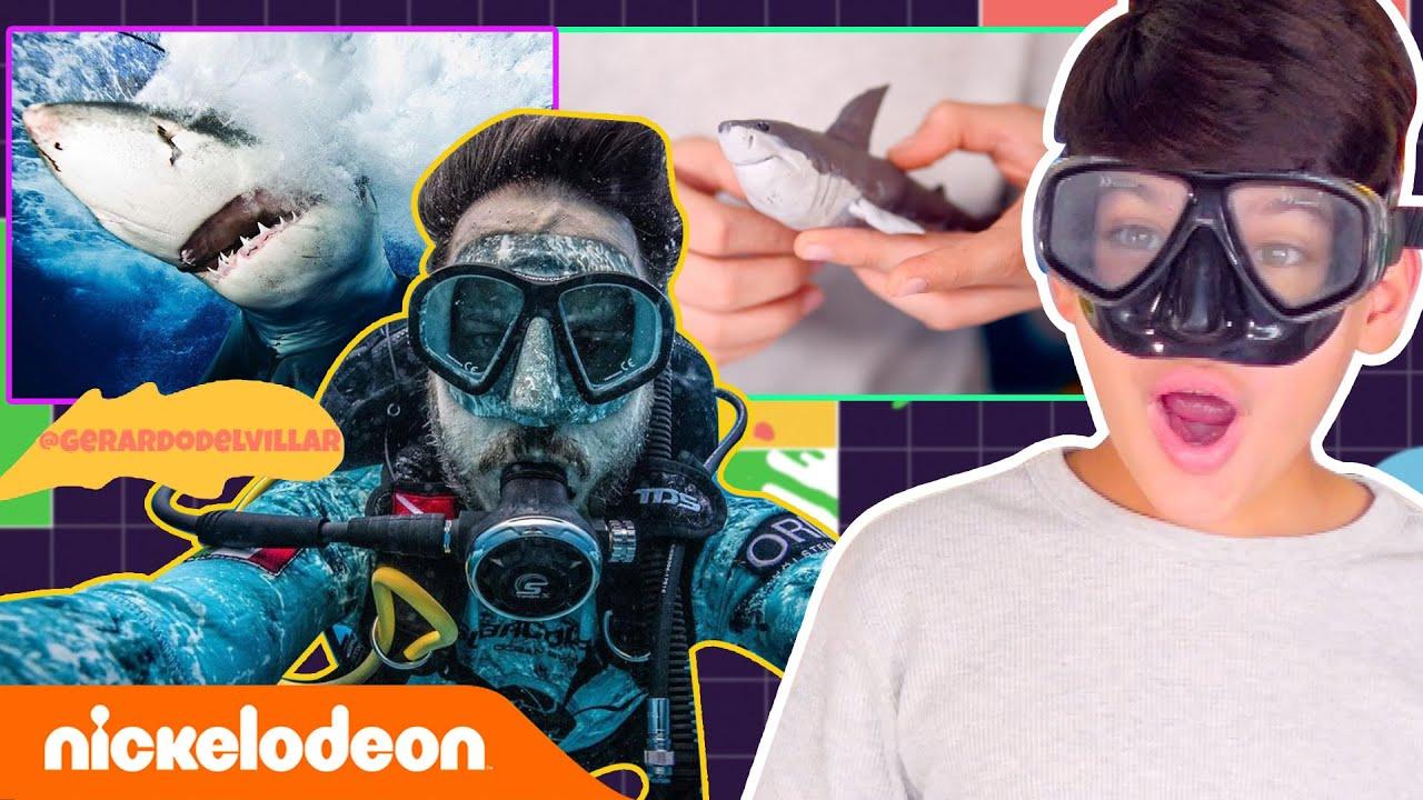 ¡Peligro! ¡Tiburón a la vista! 🦈🌊 | El Taller de Josué | Nickelodeon en Español