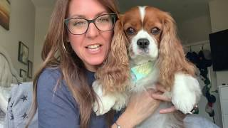 Review of my Cavalier King Charles Spaniel!
