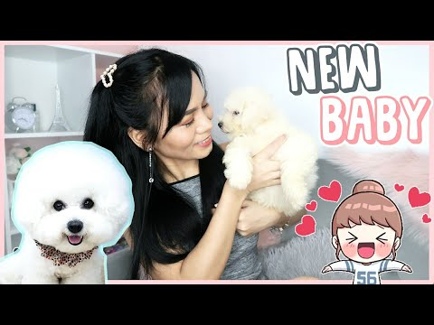 BUY VS ADOPT?! WE HAVE A NEW DOG! | Bichon Frise Puppy ❤️