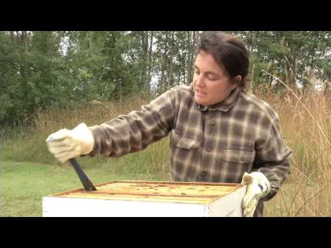 Raising Bees at Wargo Nature Center