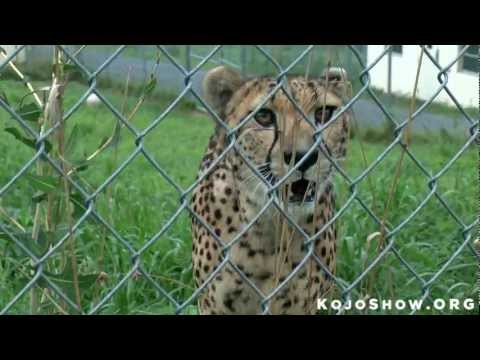 List of Pros and Cons of Zoos